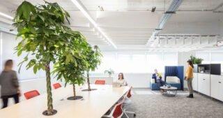 Sedam prednosti drzanja biljaka u kancelariji - Beograd / Srbija